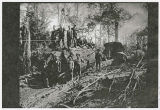 Logging in Kalama, Washington area circa 1900-1905, old growth and steam donkey