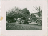Galbraith Bros. logging truck with Tozier log, Whatcom County, Washington, circa 1950