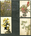 4 flower postcards
