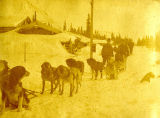 7 dog sled team