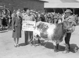 Jaycee stock show steer contest, Ritzville, Washington, April 28, 1945