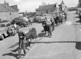 Jaycee cattle parade, Ritzville, Washington, April 15, 1946