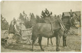 Two men pulled in a carriage by mules, Rockford Washington, ca. 1895-1915