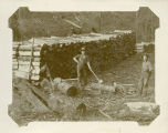 Cutting cordwood for steamboats on the Columbia River